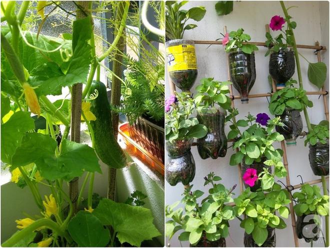 Ban công vỏn vẹn 6m² nhưng đẹp lung linh nhờ muôn sắc hoa do người vợ trẻ tự trồng - Ảnh 19.