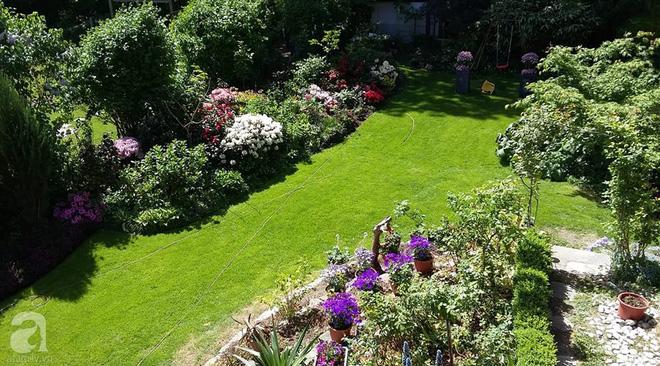 """Khu vườn đẹp như mơ của người chồng dành cả """"thanh xuân"""" đi tìm các loại hoa hiếm về tặng vợ - Ảnh 2."""