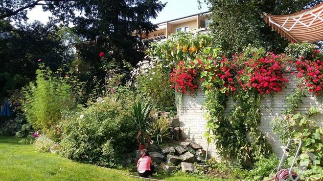 """Khu vườn đẹp như mơ của người chồng dành cả """"thanh xuân"""" đi tìm các loại hoa hiếm về tặng vợ - Ảnh 8."""