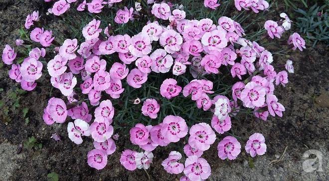 """Khu vườn đẹp như mơ của người chồng dành cả """"thanh xuân"""" đi tìm các loại hoa hiếm về tặng vợ - Ảnh 15."""
