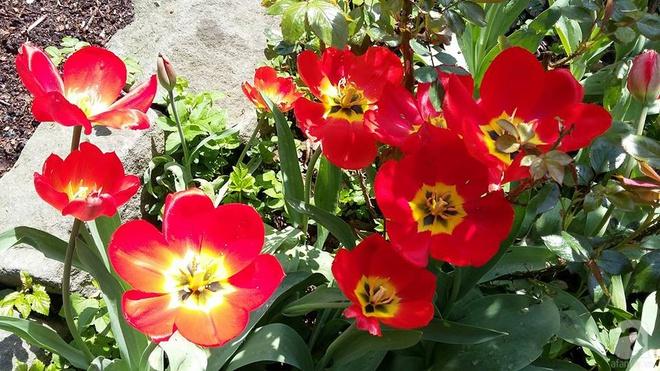 """Khu vườn đẹp như mơ của người chồng dành cả """"thanh xuân"""" đi tìm các loại hoa hiếm về tặng vợ - Ảnh 16."""