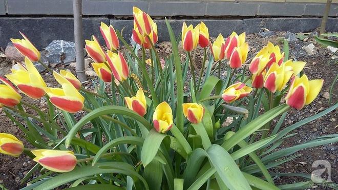 """Khu vườn đẹp như mơ của người chồng dành cả """"thanh xuân"""" đi tìm các loại hoa hiếm về tặng vợ - Ảnh 17."""