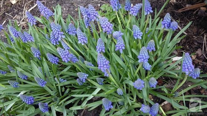 """Khu vườn đẹp như mơ của người chồng dành cả """"thanh xuân"""" đi tìm các loại hoa hiếm về tặng vợ - Ảnh 18."""