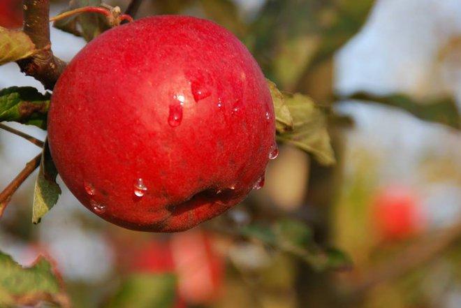 Vườn táo đẹp như cổ tích của cụ ông người Nhật dành tâm huyết suốt 11 năm chăm sóc - Ảnh 17.
