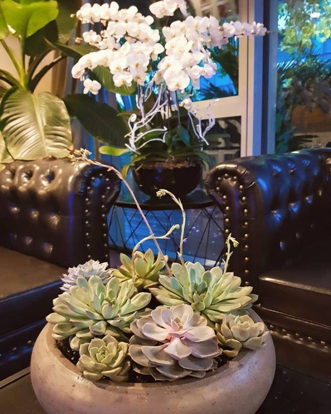 Ngắm căn hộ rộng đến 200m² và khu vườn view đẹp như trong mơ của nam ca sĩ Nathan Lee ở ngay Q1, Sài Gòn - Ảnh 14.