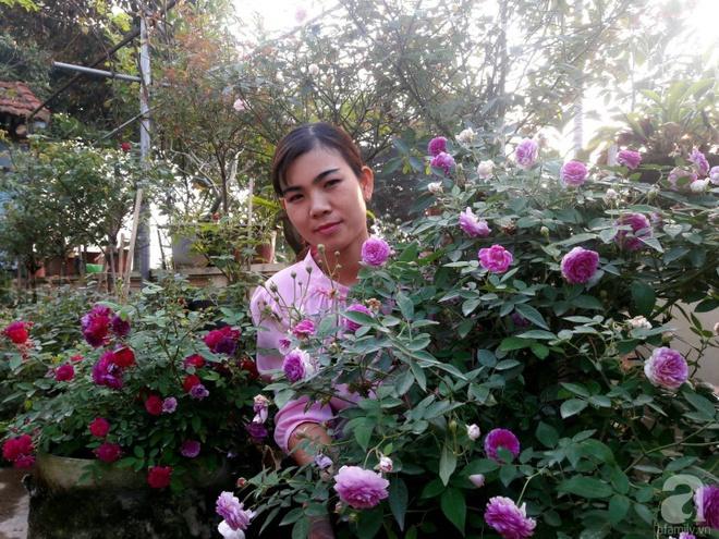 Khu vườn hoa hồng rộng hơn 1000m², rực rỡ sắc màu từ hoa nội đến hoa ngoại của cô giáo mầm non ở Hà Nội - Ảnh 1.