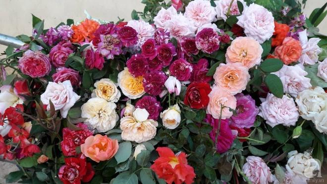Khu vườn hoa hồng rộng hơn 1000m², rực rỡ sắc màu từ hoa nội đến hoa ngoại của cô giáo mầm non ở Hà Nội - Ảnh 11.