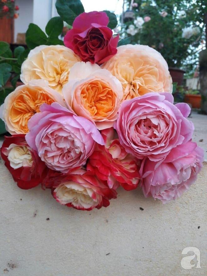 Khu vườn hoa hồng rộng hơn 1000m², rực rỡ sắc màu từ hoa nội đến hoa ngoại của cô giáo mầm non ở Hà Nội - Ảnh 14.