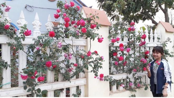 Khu vườn hoa hồng rộng hơn 1000m², rực rỡ sắc màu từ hoa nội đến hoa ngoại của cô giáo mầm non ở Hà Nội - Ảnh 21.