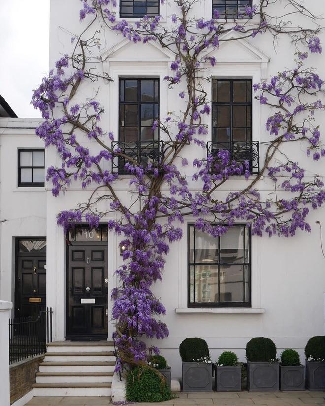 Những ngôi nhà có mặt tiền đẹp hút mắt nhờ trồng cây xanh - Ảnh 6.