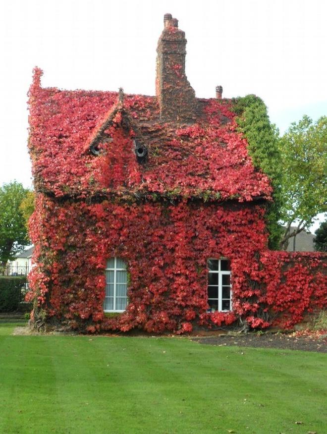 Những ngôi nhà có mặt tiền đẹp hút mắt nhờ trồng cây xanh - Ảnh 8.