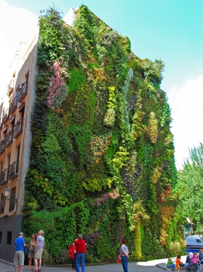 Những ngôi nhà có mặt tiền đẹp hút mắt nhờ trồng cây xanh - Ảnh 9.