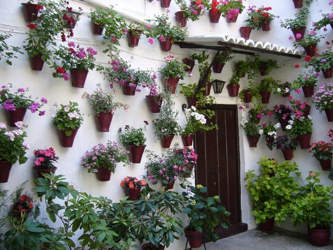 Những ngôi nhà có mặt tiền đẹp hút mắt nhờ trồng cây xanh - Ảnh 10.