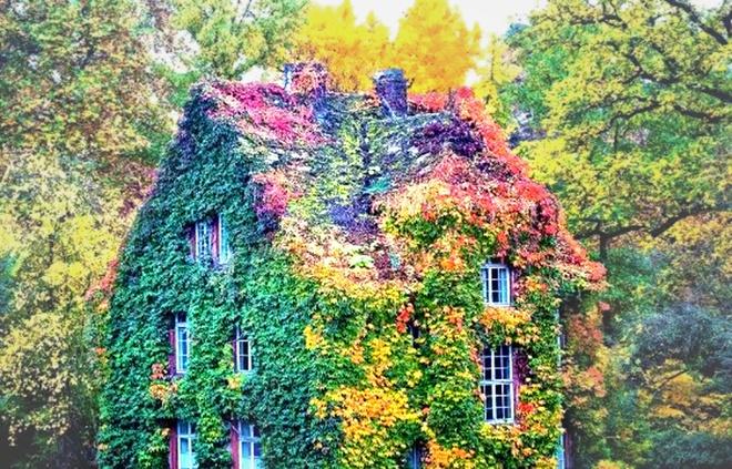 Những ngôi nhà có mặt tiền đẹp hút mắt nhờ trồng cây xanh - Ảnh 11.