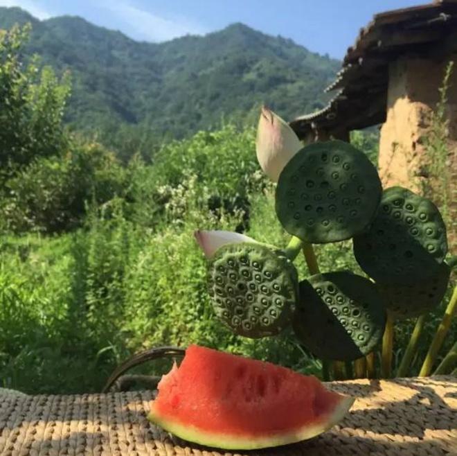 Yêu thích cuộc sống tĩnh lặng trên núi, cô gái 23 tuổi tự tay dựng ngôi nhà nhỏ, trồng rau, sống an nhàn những ngày thanh xuân - Ảnh 14.
