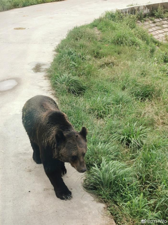 Du khách tham quan vườn thú hoang dã tận mắt chứng kiến một nhân viên bị đàn gấu tấn công đến chết, lời kể khiến cộng đồng mạng sợ hãi - Ảnh 5.