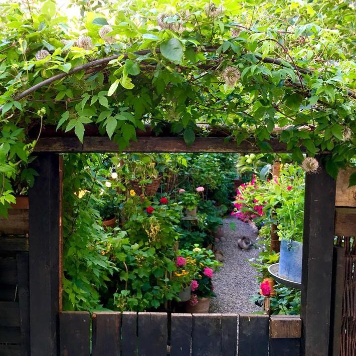 Khu vườn 70m² ngập tràn các loại rau quả và đẹp như trong cổ tích - Ảnh 10.
