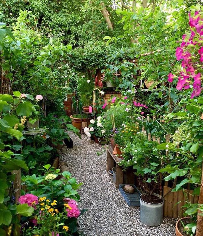 Khu vườn 70m² ngập tràn các loại rau quả và đẹp như trong cổ tích - Ảnh 8.