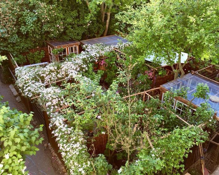 Khu vườn 70m² ngập tràn các loại rau quả và đẹp như trong cổ tích - Ảnh 2.