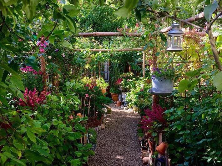Khu vườn 70m² ngập tràn các loại rau quả và đẹp như trong cổ tích - Ảnh 7.