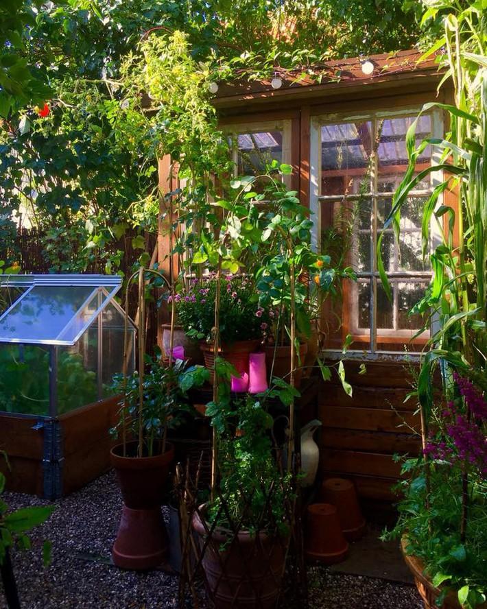 Khu vườn 70m² ngập tràn các loại rau quả và đẹp như trong cổ tích - Ảnh 5.