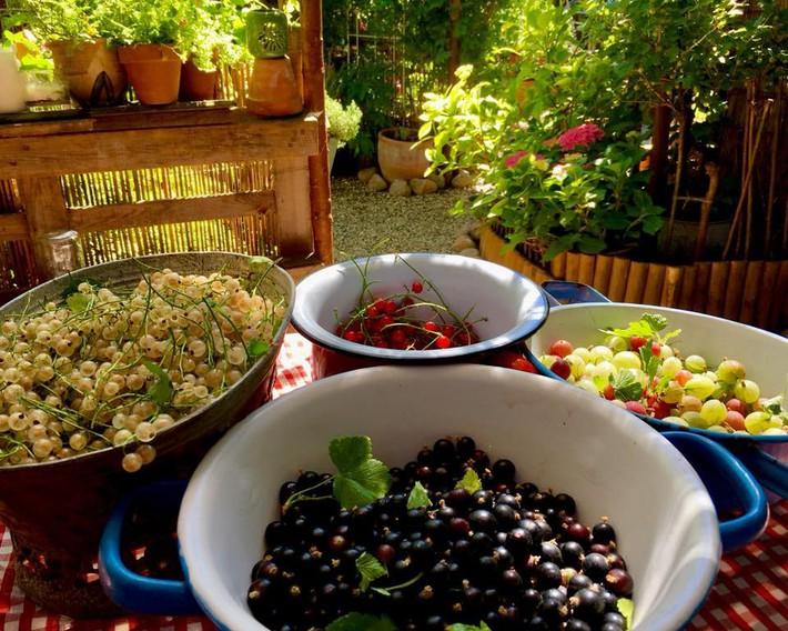 Khu vườn 70m² ngập tràn các loại rau quả và đẹp như trong cổ tích - Ảnh 26.