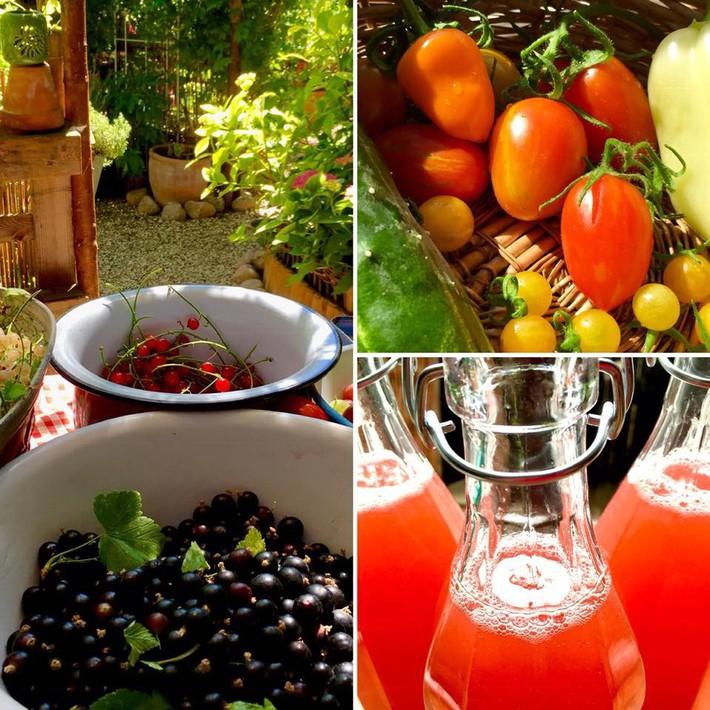 Khu vườn 70m² ngập tràn các loại rau quả và đẹp như trong cổ tích - Ảnh 25.