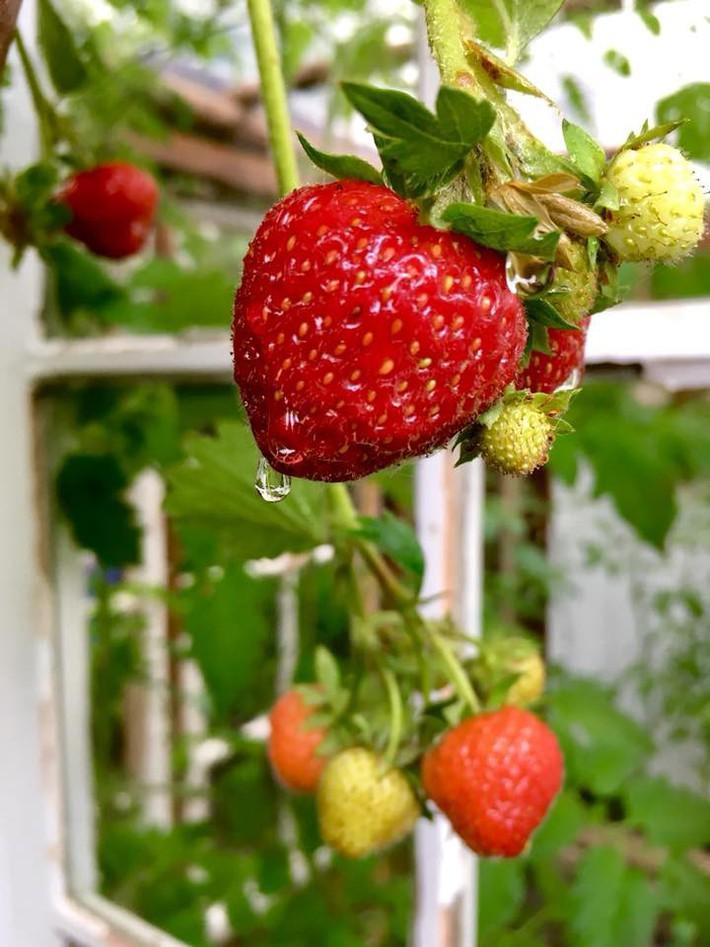 Khu vườn 70m² ngập tràn các loại rau quả và đẹp như trong cổ tích - Ảnh 24.