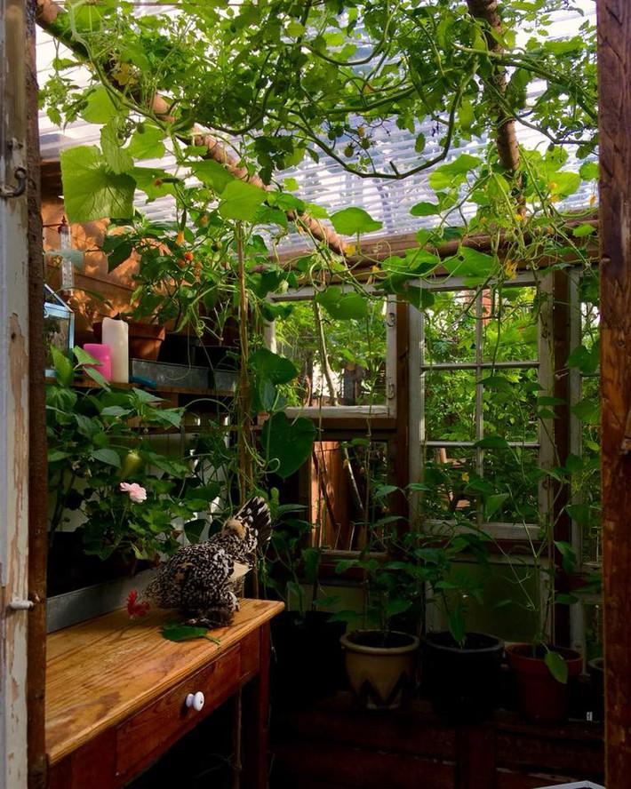 Khu vườn 70m² ngập tràn các loại rau quả và đẹp như trong cổ tích - Ảnh 17.