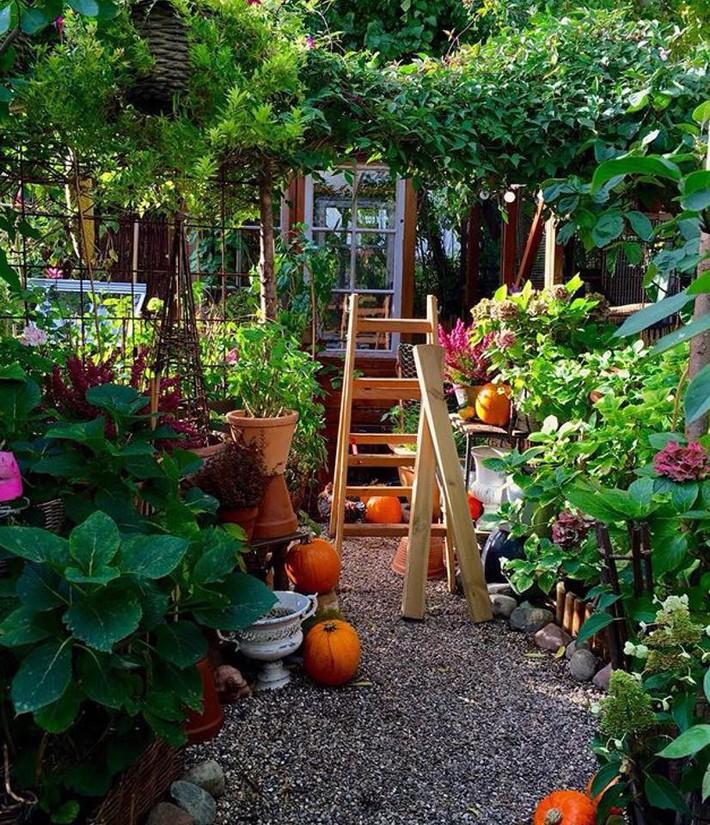 Khu vườn 70m² ngập tràn các loại rau quả và đẹp như trong cổ tích - Ảnh 16.