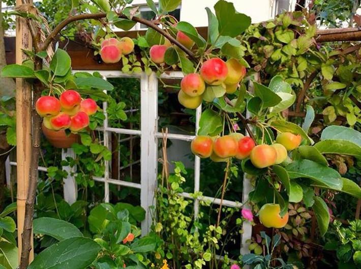 Khu vườn 70m² ngập tràn các loại rau quả và đẹp như trong cổ tích - Ảnh 15.
