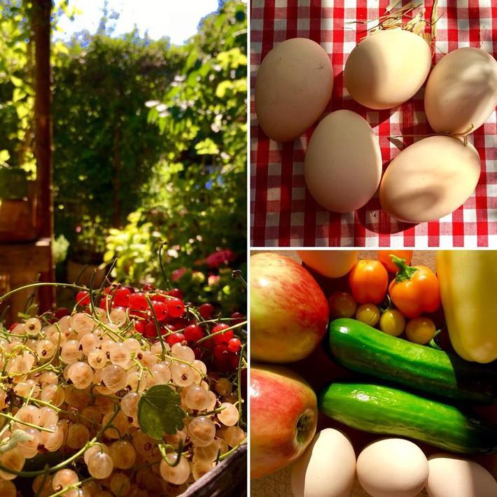 Khu vườn 70m² ngập tràn các loại rau quả và đẹp như trong cổ tích - Ảnh 22.