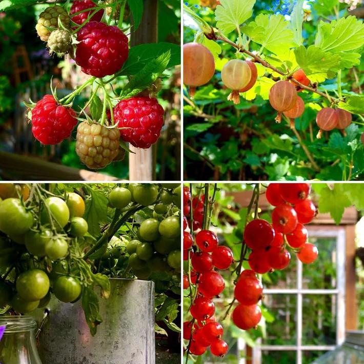 Khu vườn 70m² ngập tràn các loại rau quả và đẹp như trong cổ tích - Ảnh 20.