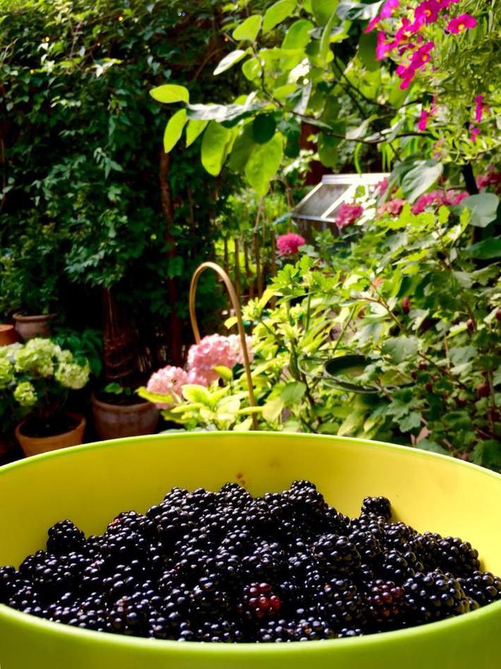 Khu vườn 70m² ngập tràn các loại rau quả và đẹp như trong cổ tích - Ảnh 19.