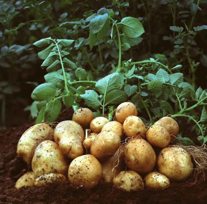 6 loại rau củ mang lại hiệu quả năng suất nhất để trồng trong khu vườn nhỏ của bạn - Ảnh 5.