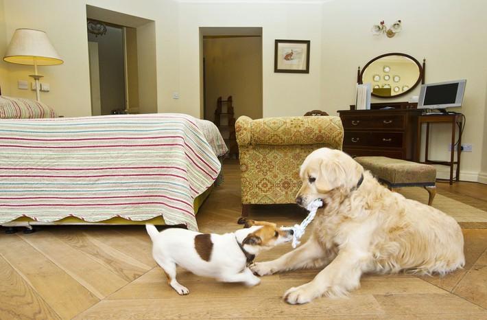 Nếu bạn đang sở hữu thú cưng vậy thì khi thiết kế nhà bạn đừng quên 5 điều sống còn này - Ảnh 3.