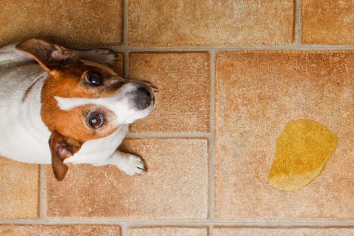 Nếu bạn đang sở hữu thú cưng vậy thì khi thiết kế nhà bạn đừng quên 5 điều sống còn này - Ảnh 2.