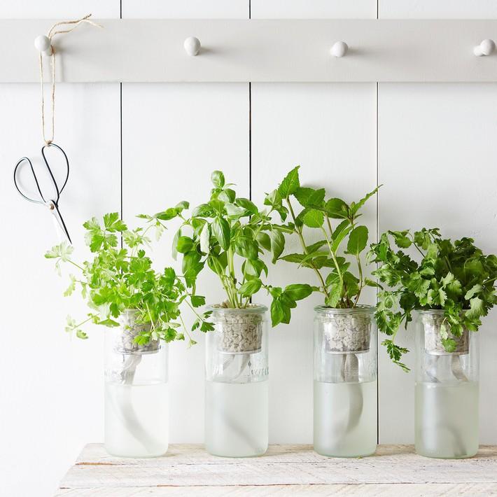 Hướng dẫn cách trồng cây bạc hà: Vừa làm duyên cho tổ ấm vừa bảo vệ sức khỏe cả nhà - Ảnh 6.