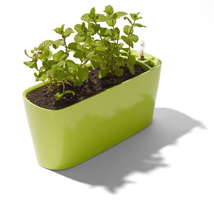 Hướng dẫn cách trồng cây bạc hà: Vừa làm duyên cho tổ ấm vừa bảo vệ sức khỏe cả nhà - Ảnh 10.
