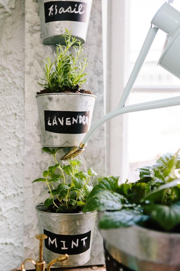 Hướng dẫn cách trồng cây bạc hà: Vừa làm duyên cho tổ ấm vừa bảo vệ sức khỏe cả nhà - Ảnh 5.