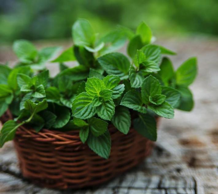 Hướng dẫn cách trồng cây bạc hà: Vừa làm duyên cho tổ ấm vừa bảo vệ sức khỏe cả nhà - Ảnh 12.