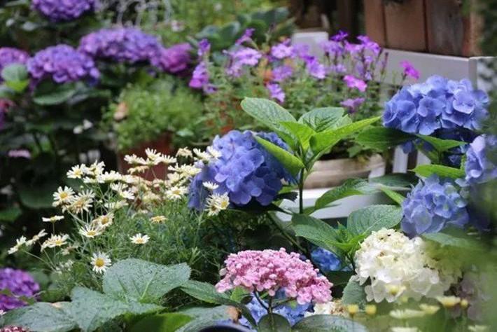 Khu vườn rực rỡ như xứ sở thần tiên của cô gái xinh đẹp với đủ loại hoa khoe sắc - Ảnh 16.