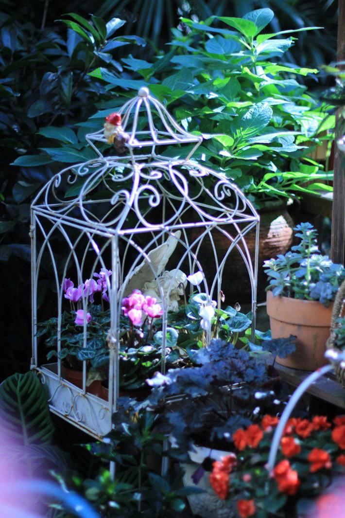 Khu vườn rực rỡ như xứ sở thần tiên của cô gái xinh đẹp với đủ loại hoa khoe sắc - Ảnh 12.