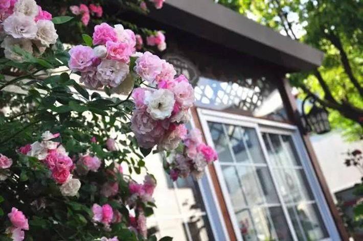 Cuộc sống trọn vẹn niềm vui trong khu vườn nhỏ dịu dàng nét xuân của cô giáo tiếng Anh - Ảnh 11.