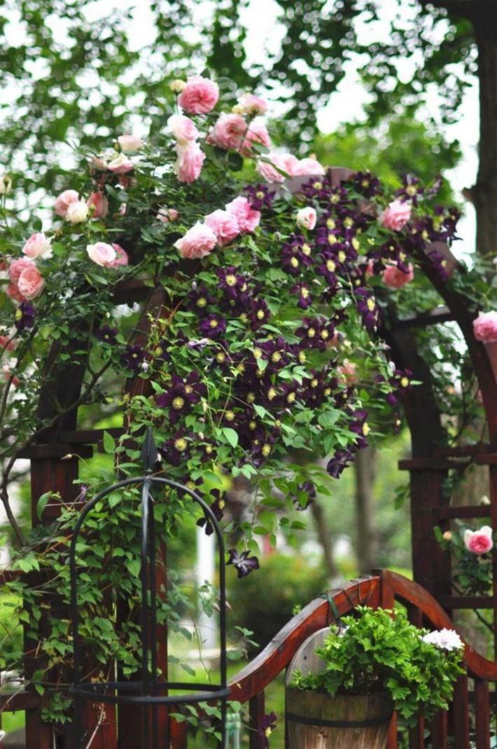 Cuộc sống trọn vẹn niềm vui trong khu vườn nhỏ dịu dàng nét xuân của cô giáo tiếng Anh - Ảnh 3.