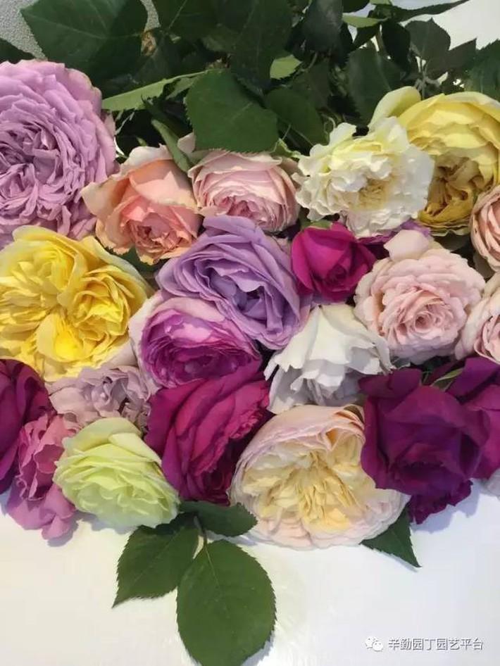 Ban công chỉ rộng vỏn vẹn 7m² nhưng tràn ngập hoa đẹp như cổ tích của bà mẹ bỉm sữa 2 con - Ảnh 15.