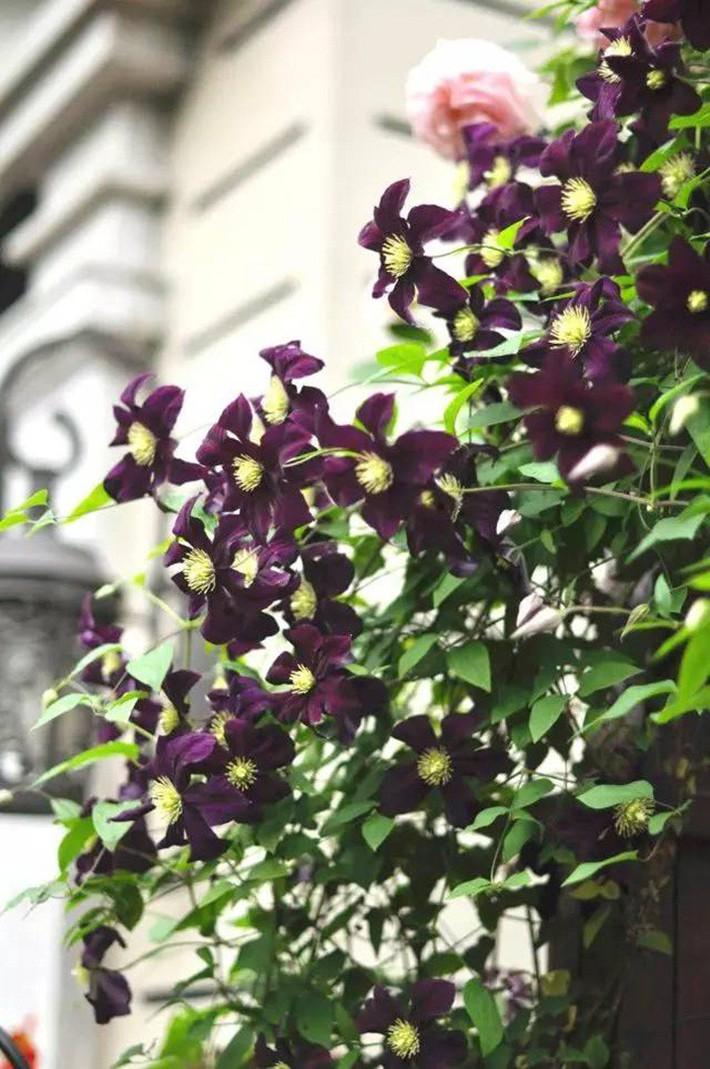 Cuộc sống trọn vẹn niềm vui trong khu vườn nhỏ dịu dàng nét xuân của cô giáo tiếng Anh - Ảnh 6.