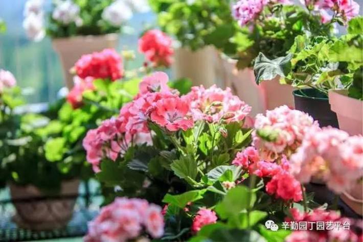 Ban công chỉ rộng vỏn vẹn 7m² nhưng tràn ngập hoa đẹp như cổ tích của bà mẹ bỉm sữa 2 con - Ảnh 2.