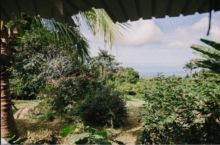 Ngôi nhà Hawaii mộc mạc gây thương nhớ vì được xây dựng bằng tay với các đồ nội thất thủ công đẹp tinh tế - Ảnh 15.