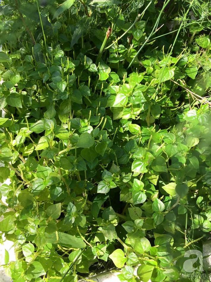 Mẹ đảm ba con trồng rau trên mái, cả nhà quanh năm không lo thiếu thực phẩm sạch ở Hà Nội - Ảnh 6.